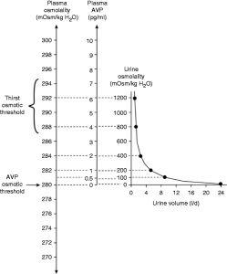 Estimulación osmótica de la liberación de ADH.